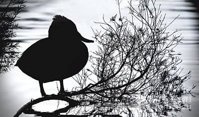 Photograph - Delightful Duck by Kym Clarke