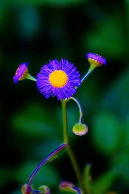 Delightful Flower Art Print