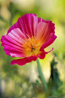 Pink Poppy Blossom Macro Photograph - Delightful by Heidi Smith