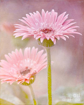 Gerbera Daisy Digital Art - Delightfully Pink by Betty LaRue