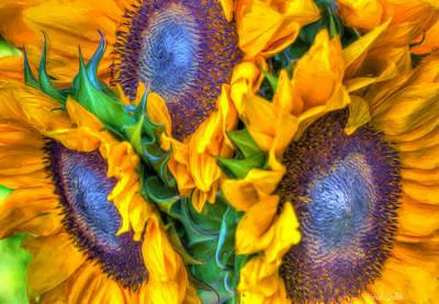 Photograph - Delightfully Sunny by Heidi Smith