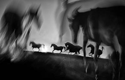 Running Horses Photograph - Deliverance by Milan Malovrh