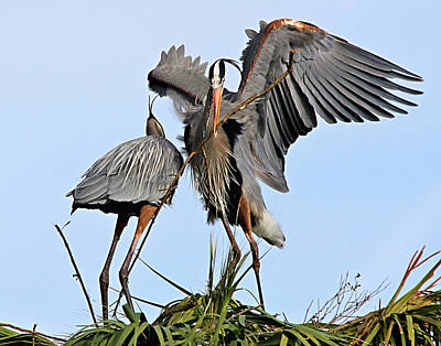 Photograph - Delivering Nesting Material by Ira Runyan