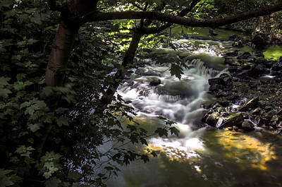 Photograph - Dell by Ross G Strachan