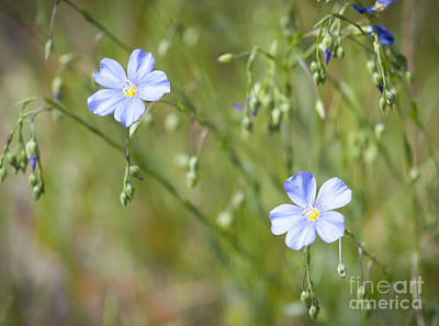 Photograph - Dellicate Blossoms by Idaho Scenic Images Linda Lantzy