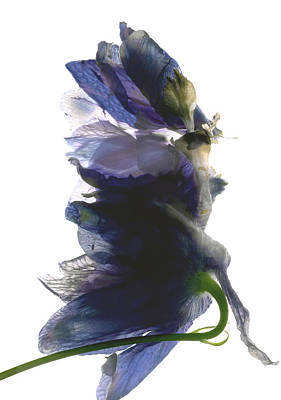 Still Life Digital Art - Delphinium Dance by Julia McLemore