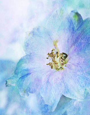 Delphinium Photograph - Delphinium by David and Carol Kelly