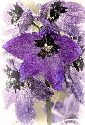 Flowers Photograph - Delphinium Purple by Marcia Colelli