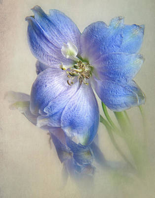 Blue Delphinium Photograph - Delphinium Viii by David and Carol Kelly