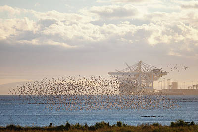 The Flight Of The Snow Geese Photograph - Deltaport by Christopher Kimmel
