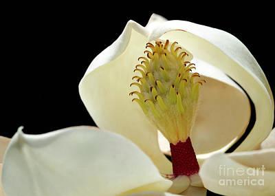 Photograph - Demure Magnolia by Sabrina L Ryan