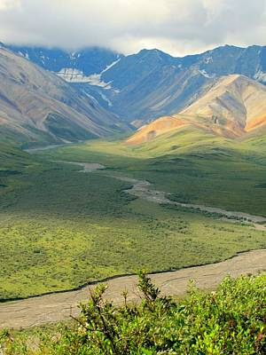 Photograph - Denali National Park by Lisa Dunn