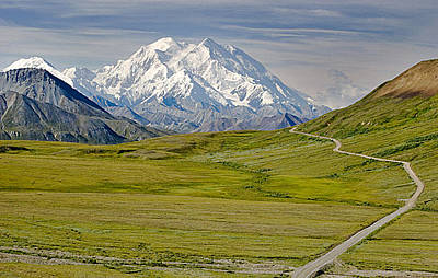 Photograph - Denali Park by Gracia  Molloy
