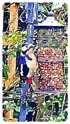 Painting - Dendrocopos Major 'great Spotted Woodpecker' by Vix Edwards