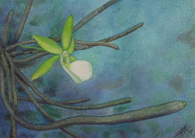 Painting - Dendrophylax Funalis by Robin Street-Morris