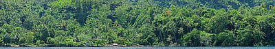 Papua New Guinea Photograph - Dense Forest On The Coast, Papua New by Panoramic Images