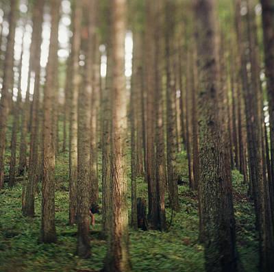 Photograph - Dense Forest Rising On Hill by Danielle D. Hughson