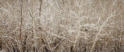 Photograph - Dense Trees In Snow by Marilyn Hunt