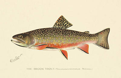 Painting - Denton Brook Trout by Gary Grayson