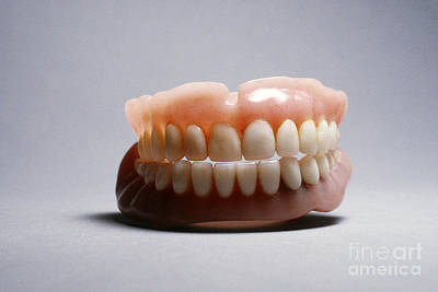 Photograph - Dentures by Tierbild Okapia