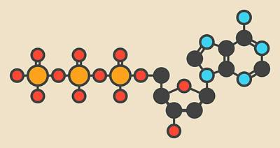 Deoxyadenosine Molecule Art Print
