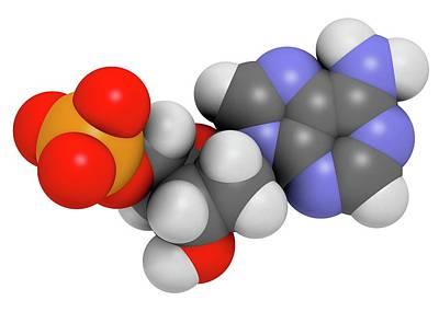 Deoxyadenosine Monophosphate Molecule Art Print by Molekuul