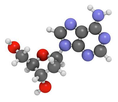 Nucleoside Photograph - Deoxyadenosine Nucleoside Molecule by Molekuul