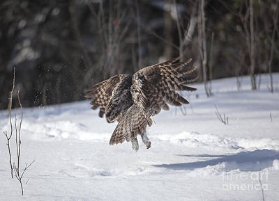 Ggo Photograph - Depart / Take Off by Nicole  Cloutier Photographie Evolution Photography