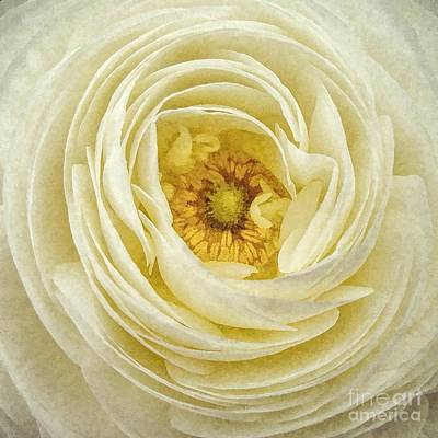 Photograph - Depth Of Beauty by Peggy Hughes
