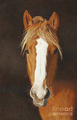 Drawing - Derby by Helen Bailey