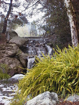 Photograph - Descanso Gardens 1 by Laura Hamill