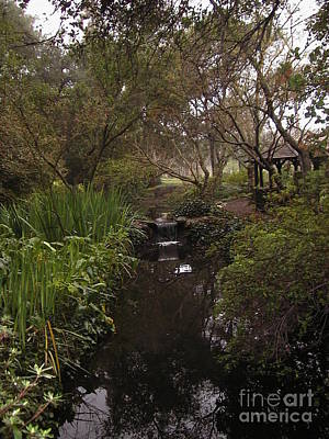 Photograph - Descanso Gardens 2 by Laura Hamill