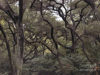 Photograph - Descanso Oaks 3 by Laura Hamill