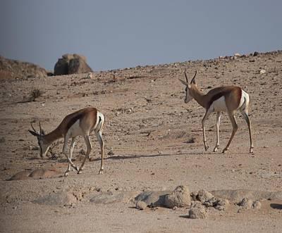 Personalized Name License Plates - Desert Antelope by Jonathan Laverick