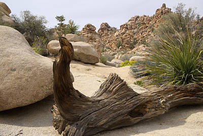 Photograph - Desert Art by Lucinda Walter