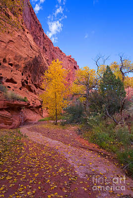 Escalante Photograph - Desert Autumn by Mike  Dawson