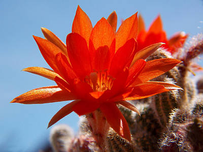 Photograph - Desert Beauty by Chris Cox