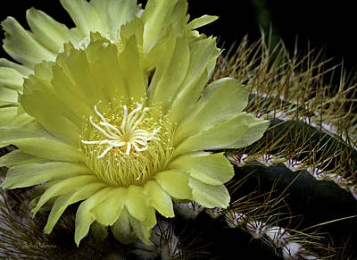 Photograph - Desert Bloom by Julie Palencia