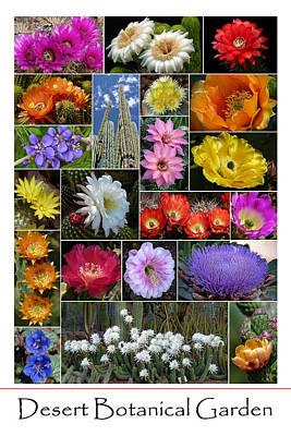 Desert Botanical Garden Art Print