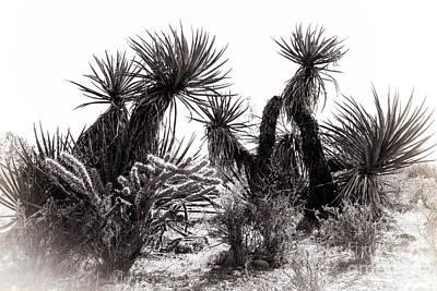 Desert Cactus Art Print by Brenda Giasson