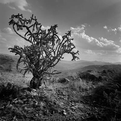 Photograph - Desert Cactus by David and Carol Kelly