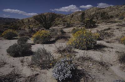Photograph - Desert Canyon And Wildflowers by Don Kreuter