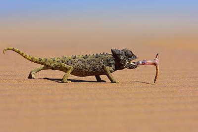 Desert Chameleon Catching A Worm Art Print by Freder