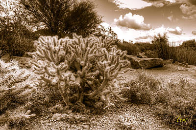 Lenz Wall Art - Photograph - Desert Cholla And Sky by George Lenz