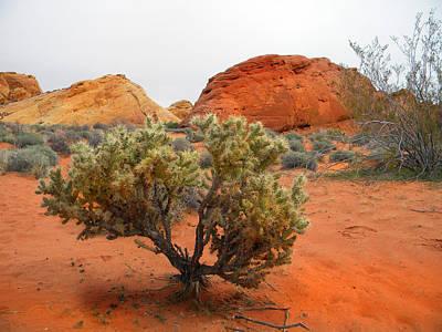 Photograph - Desert Cholla Cactus by Frank Wilson