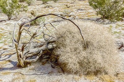 Digital Art - Desert Death by Photographic Art by Russel Ray Photos