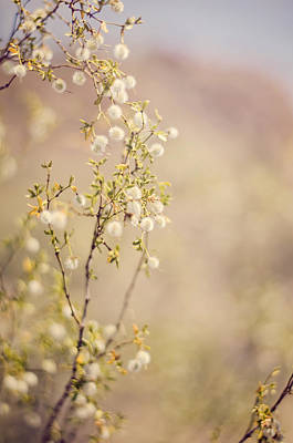 Photograph - Desert Delicates by Heather Applegate