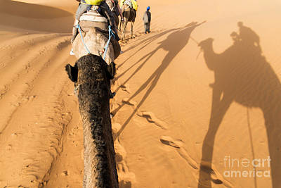 Camel Wall Art - Photograph - Desert Excursion by Yuri San