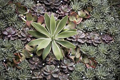 Keith Richards - Desert Flora by Terri Winkler
