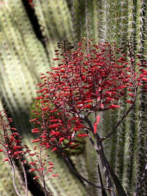 Photograph - Desert Flower by Robert Lozen